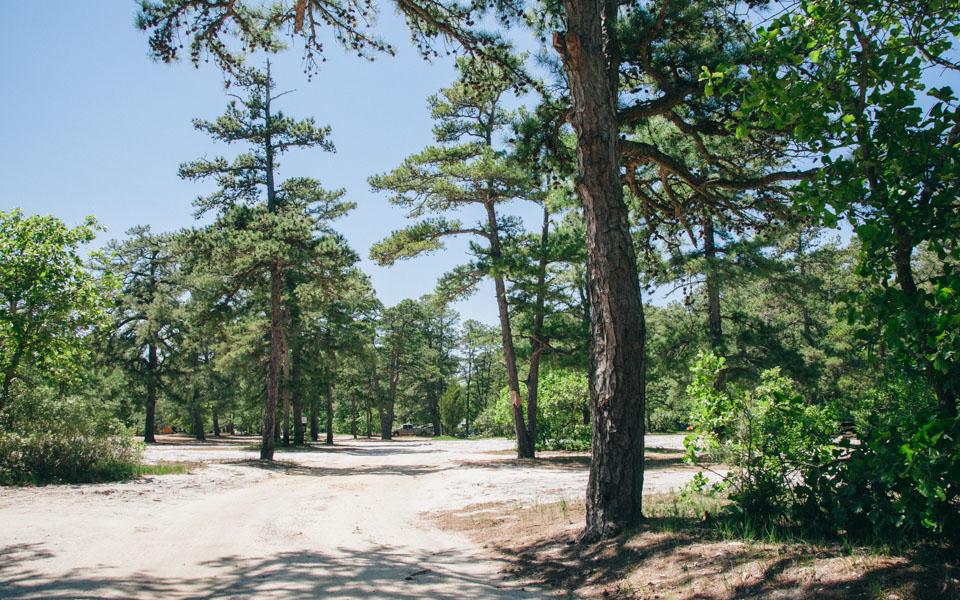 Bodine Field Camping - Camp Trend